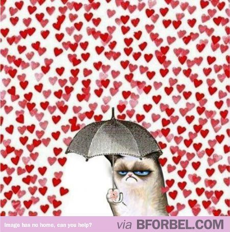 This is how I feel with Valentine's Day coming up...  Grumpy Cat Hates Valentine's Day