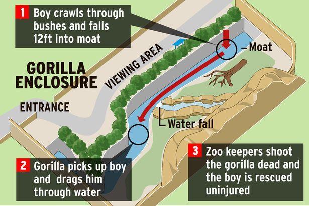 Nel 1895 lo zoo di Cincinnati ospitava qualche decina di mammiferi, qualche centinaio di uccelli, e un centinaio di Sioux. Si, avete letto bene: al posto dei gorilla, c'erano i nativi americani della popolazione Sicangu Sioux, che fruttarono allo zoo, pro