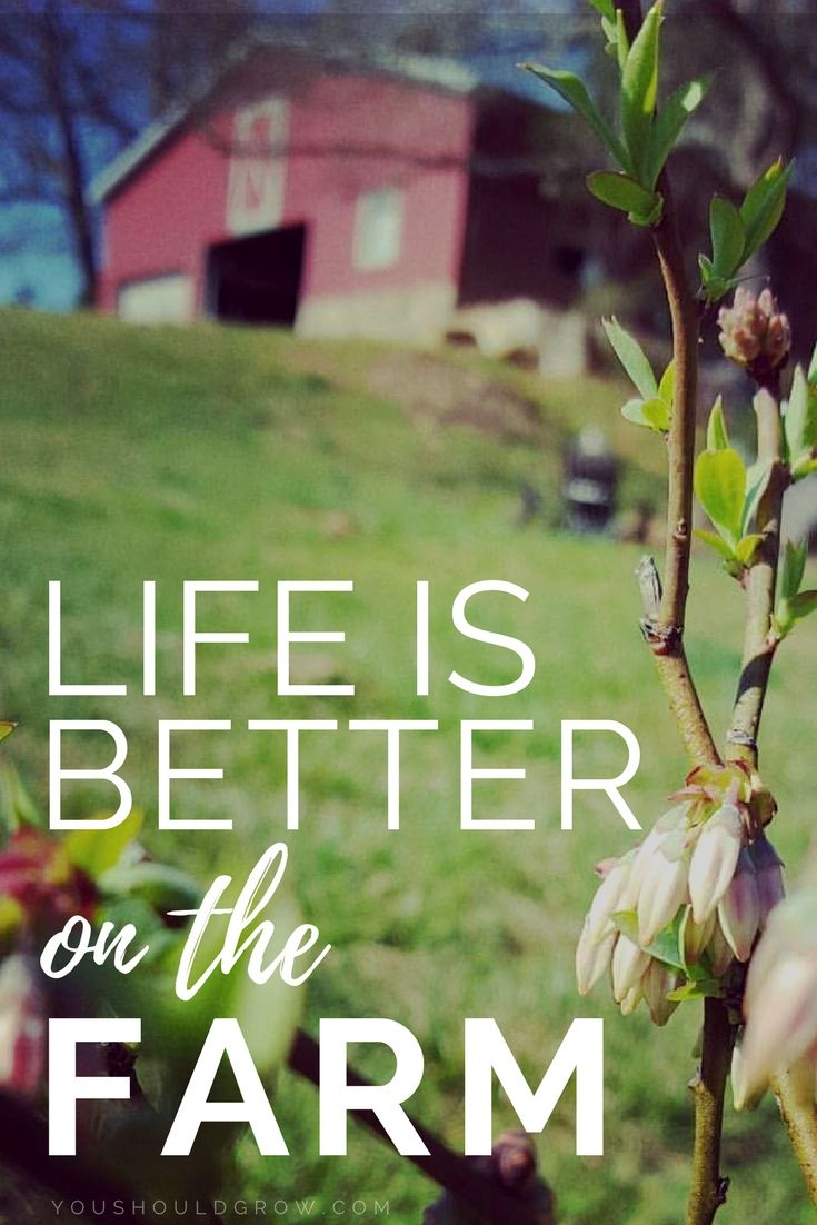 Quotes: Life is better on the farm. Living the dream life on a farm is where I was meant to be. via @youshouldgrow