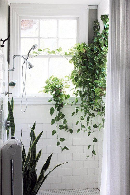 Bathroom plant idea for you...You could have vine plant setting on your shower ledge. Add a Little Green: Plants in the Bathroom   Apartment Therapy: