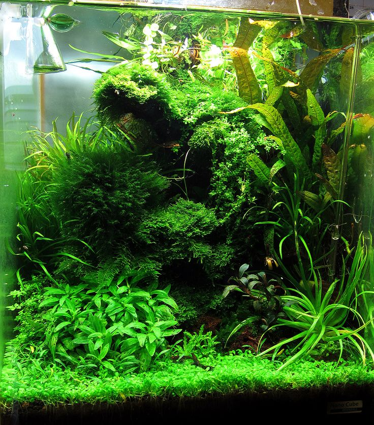 Freshwater Aquascape Ideas: 17+ Best Images About Aquascape Layout Inspiration On