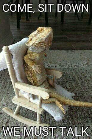 best 25 funny lizards ideas on pinterest cute lizard