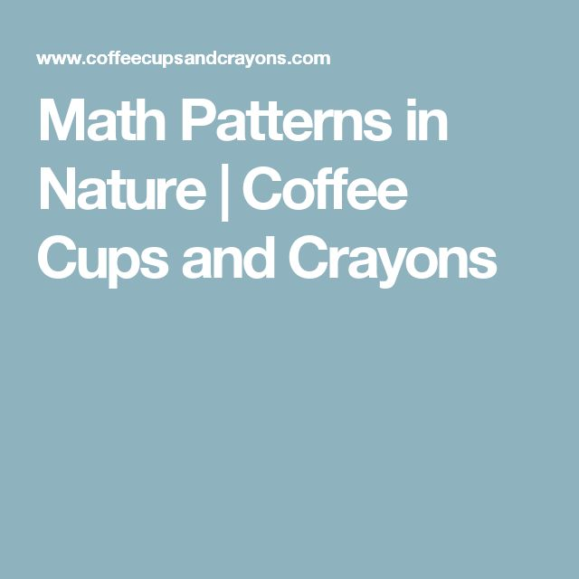 Math Patterns in Nature | Coffee Cups and Crayons