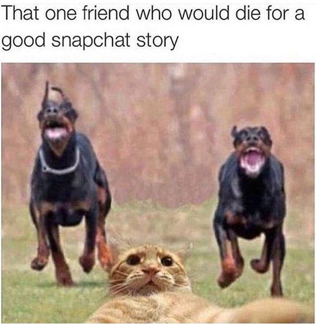 Petty Wap Wednesday memes