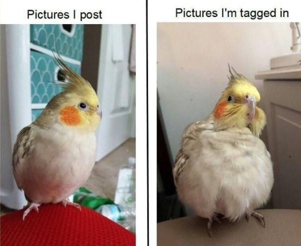 Solid Bird Collection To Ruffle Your Feathers 33 Memes Funny Parrots Funny Bird Pictures Really Funny Memes