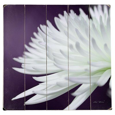 Artehouse LLC White Chrysanthemum Photographic Print Multi-Piece Image on Wood Size: 1