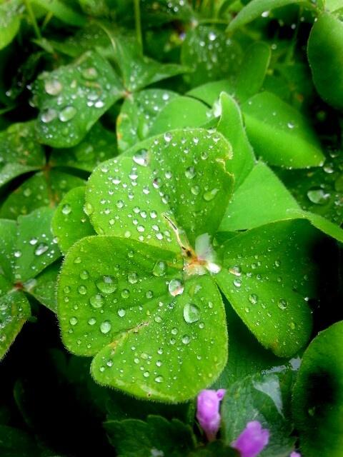Verde umido