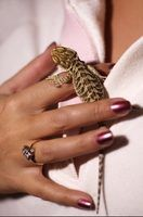 Baby bearded dragons are naturally friendly.