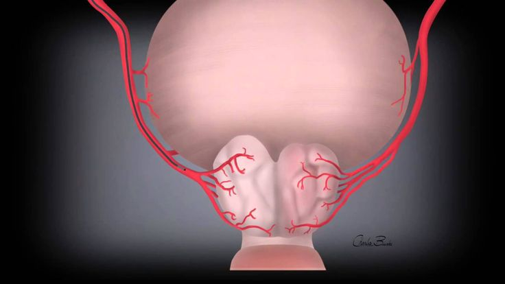 For the last four years, doctors at the UNC Medical Center in Chapel Hill have been using an innovative, catheter-based procedure called Prostatic Artery Embolization (PAE) for the treatment of an enlarged prostate, also called benign prostatic hyperplasia, or BPH. UNC Medical Center now...