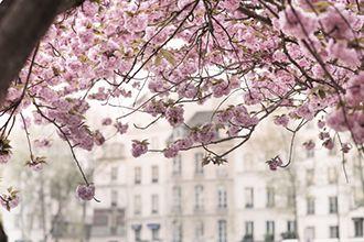 S'offrir une cérémonie du thé, pique-niquer à l'ombre d'un cerisier en fleurs, prendre un bain comme à Tokyo... Découvrez nos idées parisiennes pour vivre à la japonaise.