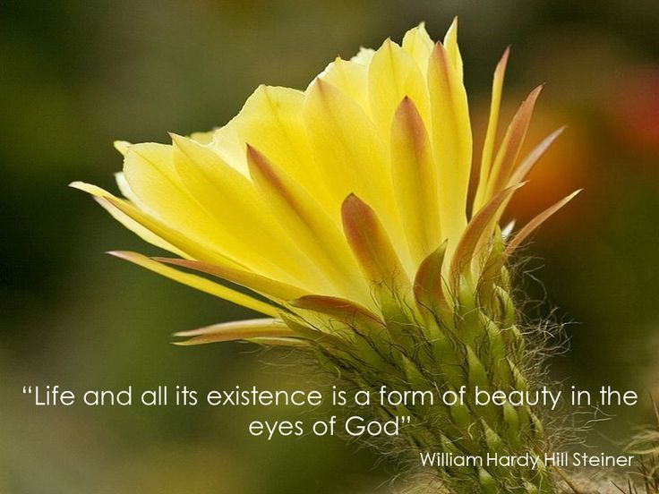 """""""Life and all its existence is a form of beauty in the eyes of God"""""""