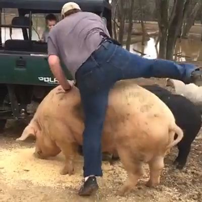 Compilation Of Funny Riding Pets 😂