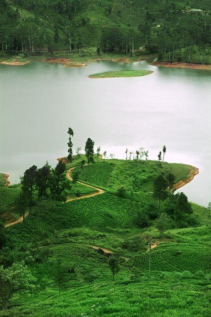 Ceylon Tea Trails, Hatton by Sri Lanka Tailormade, via Flickr