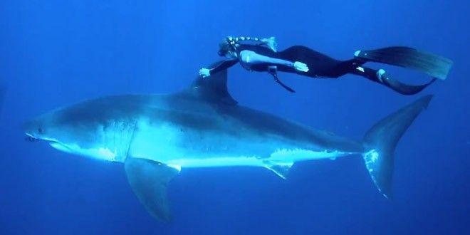 Ocean Ramsey nage avec un grand requin blanc [video] - http://www.2tout2rien.fr/ocean-ramsey-nage-avec-un-grand-requin-blanc-video/
