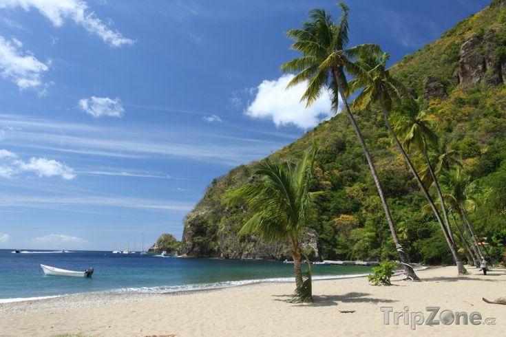 Palmy na pláži (Svatá Lucie)