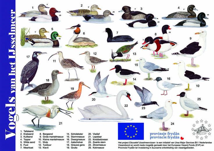 Herkenningskaart Vogels van het IJsselmeer, gemaakt in opdracht van de Nederlandse Vissersbond.