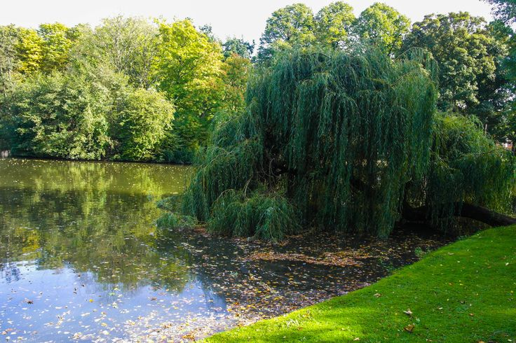 Wilhelminapark- Utrecht