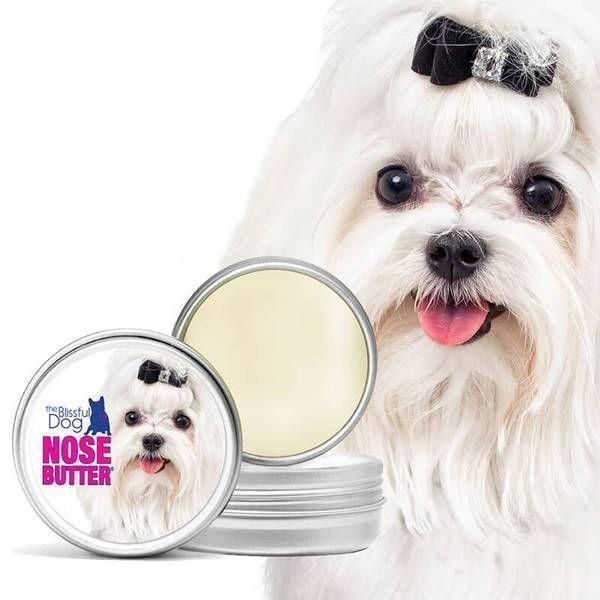 Maltese Nose Butter Moisturizes Your Little Dog S Rough Dry Nose Fast Maltese Nose Butter Moisturizes Your Little Dog S Rough Dr Dry Dog Nose Maltese Dog Nose