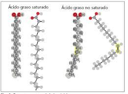 Los lipidos poseen mayor proporcion de carbono e hidrogeno, poco oxigeno y escasamente radicales que puedan interaccionar con el agua, por ello, al tratarse de cadenas carbonadas con hidrogenos o anillos, no mostraran soubilidad con el agua, pero si con solventes organicos.