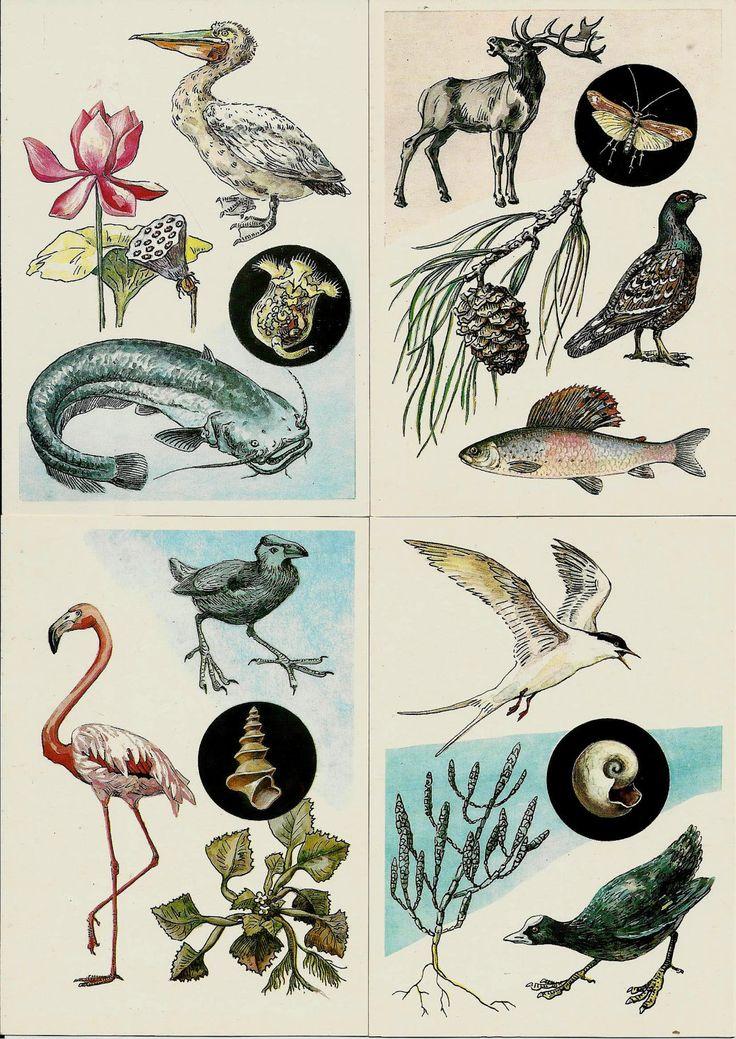 Life sea- Vintage Russian Soviet Postcards  - set of 15 by LucyMarket on Etsy