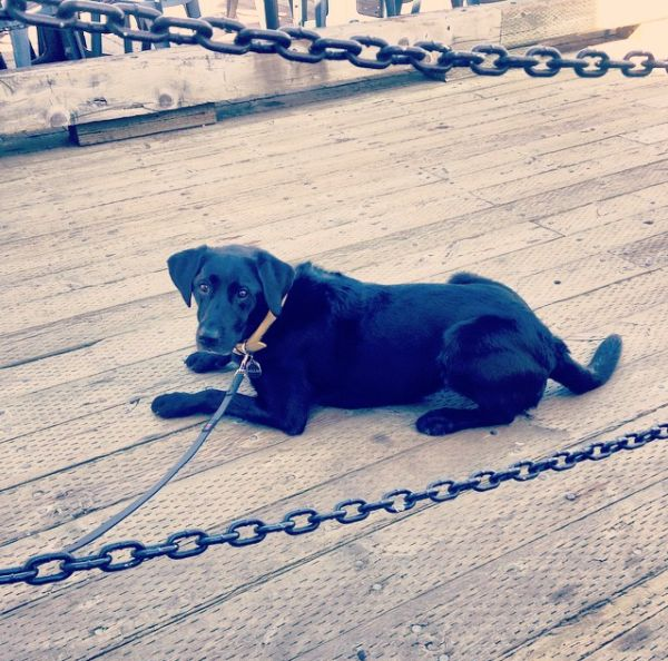 Dog Friendly Maine Vacations