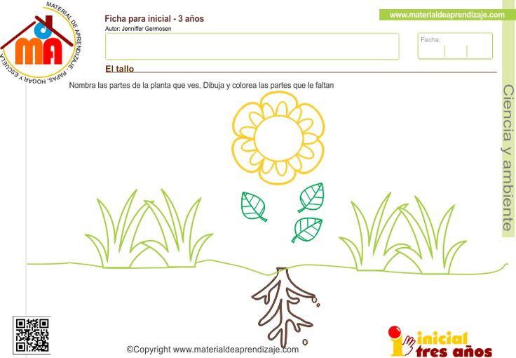 Ficha imprimible el tallo para ni os a partir de los 3 - Fichas de plantas para ninos ...