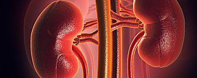 10 Symptoms Of Kidney Disease One Shouldn't Ignore