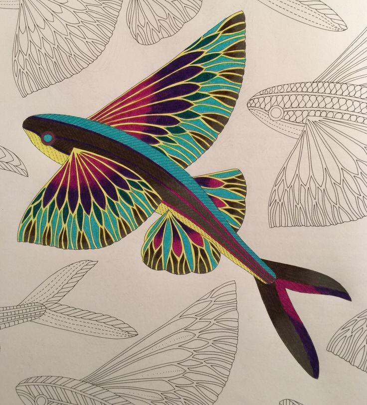 Adult Coloring Books Colour Book Ceramic Fish Sea Creatures Colored Pencils Dolphins Animal Kingdom Feminism