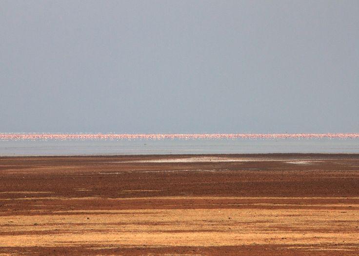 Flamingo sunset @Tanzania