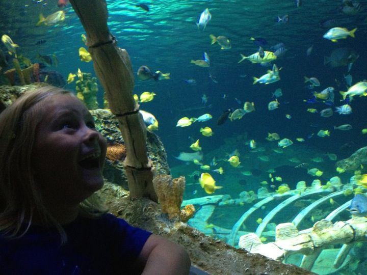 Sea Life Aquarium In Kansas City Mo Transports You Into