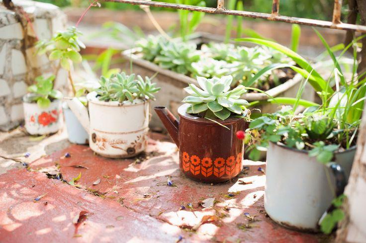 Beautiful pot plants, old enamel mugs