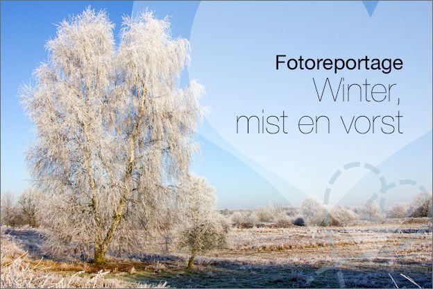 In dit artikel laat ik je mijn foto's zien die ik heb gemaakt van een apart natuurverschijnsel, mist en vorst. Wat een mooi effect! www.nobody-else.nl #blogfeestje