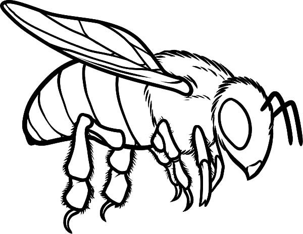 Bee Coloring Pages Flying Insects And Bugs Bee Coloring Pages