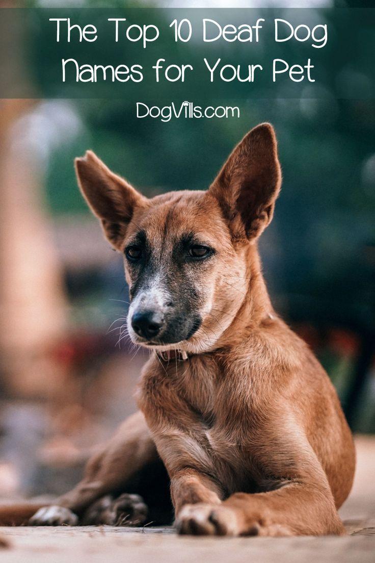 The Top 10 Deaf Dog Names For Your Pet Deaf Dog Dog Names Deaf