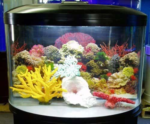 Image result for half round fish tank
