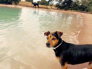Campus Perruno, la primera piscina para perros en Madrid
