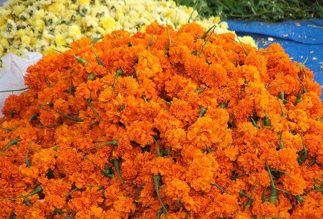 Kerala Onam Pictures: Onam Flowers