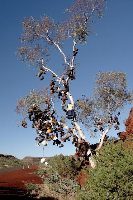 Boot tree, Pannawonica Western Australia by paulmoore61, via Flickr