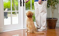 Potty Training - Housebreaking your puppy isn't as tough as it might seem. Click through for training tips! #DogTraining