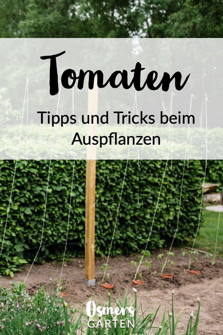 Tomaten Vermehren Pflegen Ernten Teil 5 Auspflanzen Und Rankhilfe Diy Osmers Garten Tomaten Pflanzen Tomaten Garten Rankhilfe
