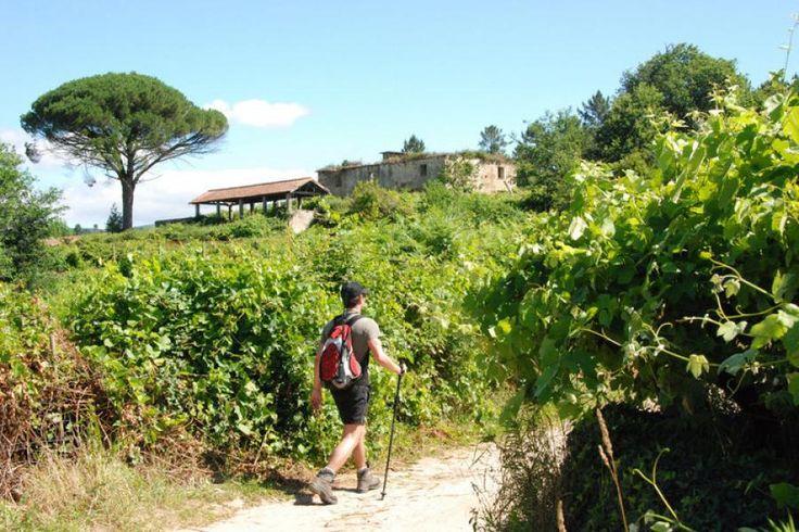 Wer den Pilgermassen auf dem überlaufenen französischen Weg nach Santiago entgehen möchte, findet im portugiesischen Jakobsweg eine attraktive Alternative. Der Camino Português durch den grünen Norden gehört landschaftlich wie kulturell zu den schönsten Jakobswegen, hat aber einen Nachteil.