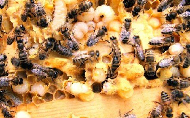 Se desideri saperne di più delle api e della loro vita #venditaapiregine #pacchid'api