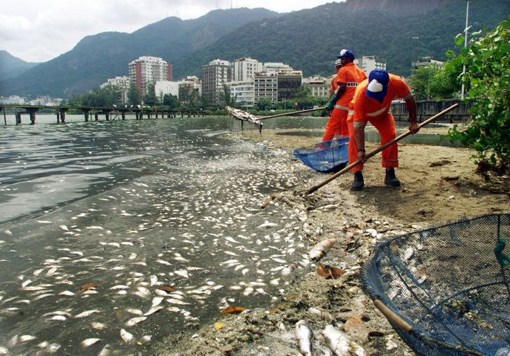 2 waterways that will host 2016 Olympic events are filled with dead fish and trash 16 months before the games