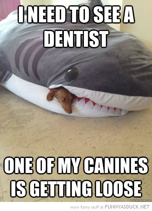 funny shark picture with dog in mouth | See A Dentist | Funny As Duck | Funny Pictures