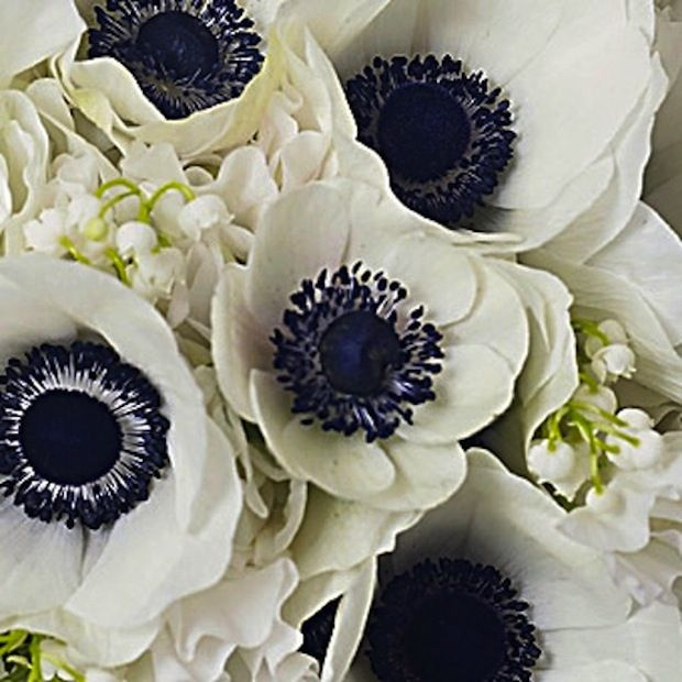 white flowers with navy center | anemones_navy_white_preppy_wedding_auburn_al_wedding_planner_day_of ...