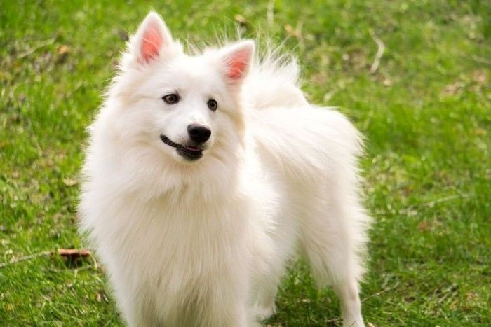 20 Low Maintenance Dog Breeds Popular And Adorable Low Maintenance Dog Breeds Tiny Dog Breeds Dog Breeds