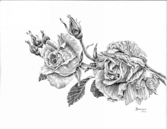 Rosa graphite by Brenda Hill
