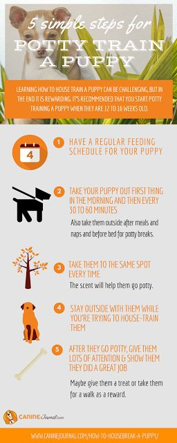 how to successfully potty train a puppy