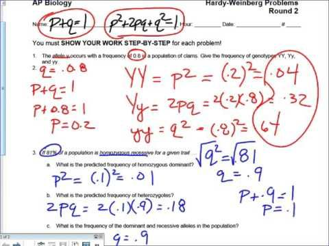 Hardy Weinberg Problems Step by Step - YouTube | Biology ...