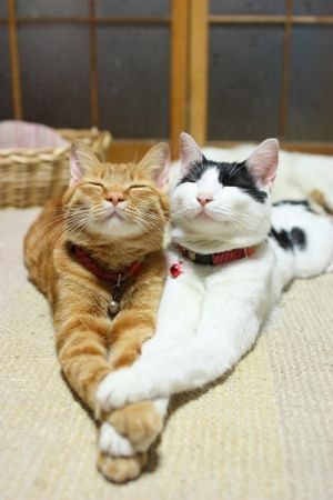 :) BFF's Gotta love your friends @Jordan Colby... if we were cats :) hahaha i can just picture us doing those faces now!